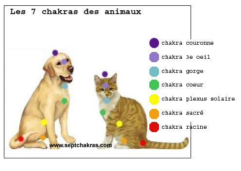 Pension pour  chats