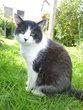 NEO, adorable chat mâle de 3 ans et demi, yin et...