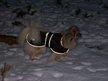 Petit manteau - neuf pour petit chien