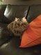 Cat sitting Waterloo/Rhodes/Braine/Lasne
