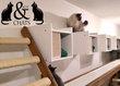 Nouvelle pension pour chats à Waremme (Liège)