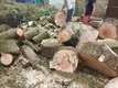 Abattage & élagage arbres, broyage,...