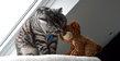 Pension pour chats Les jardins d'O'Malley