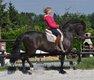Cours de dressage espagnol et d'équitation de...