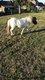 Pony wandeling
