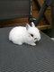 Bébés lapins extra nain aux petites oreilles