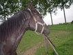 Pension chevaux à Momalle