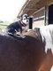 Envie de monter à cheval