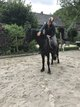 Superbe cheval noir