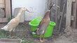 Couple canard