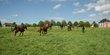Pension pour chevaux à Rumillies