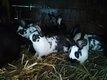 8 Jeunes lapins garenne.