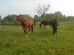 Paradis pour chevaux