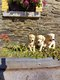 Golden retriever de la ferme du Batis