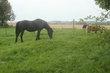 Pension pour poneys ou chevaux à Orp-jauche