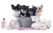 Toilettage Canin GRATUIT - Wépion