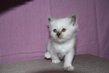 1 chatons