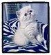 💙Magnifiques chatons(Exotic Shorthair à...