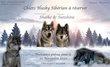 Chiots husky sibérien LOSH à réserver