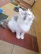 Magnifiques chatons