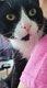Chat mâle à donner agé de 2 ans adorable...