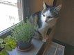 Musty, un amour de chat