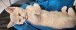 1 chaton sociable femelle