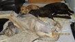 Le gite canin : Club de vacances pour chiens